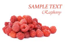 Free Fresh Raspberry Isolated On White Background Royalty Free Stock Photo - 15526685