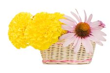 Free Beautiful Flowers In A Basket Royalty Free Stock Photo - 15526975