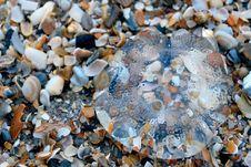 Free Jellyfish Stock Photos - 15527013