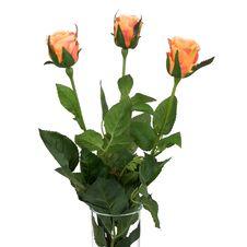 Free Orange Roses Royalty Free Stock Images - 15527309