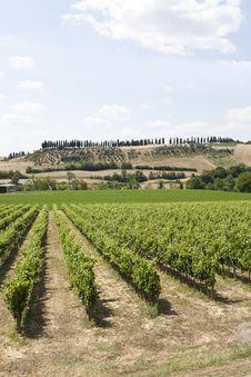 Free Vineyard Royalty Free Stock Image - 15528726