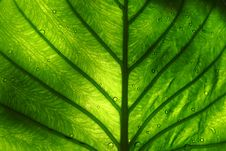 Free Green Leaves Royalty Free Stock Image - 15528926