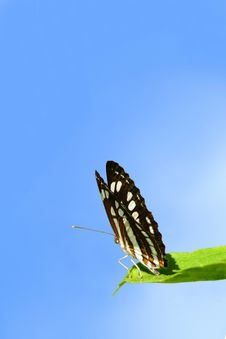 Free A Butterfly In A Sky Background Royalty Free Stock Photos - 15529108