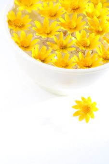 Free Yellow Flowers Royalty Free Stock Photos - 15529878