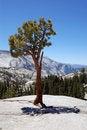 Free Yosemite National Park Royalty Free Stock Image - 15538786