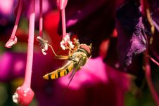Free Insect Collecting Nectar Stock Image - 15530231