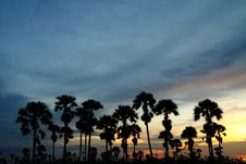 Free Silhouette Of Palm Trees. Royalty Free Stock Photography - 15531247