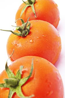 Free Tomatoes Stock Photo - 15531660
