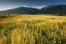 Free Field And Mountains Royalty Free Stock Photo - 15531685