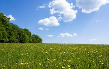 Free Spring Landscape Stock Photo - 15531820
