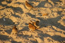 Free Birds On The Beach Royalty Free Stock Images - 15532509