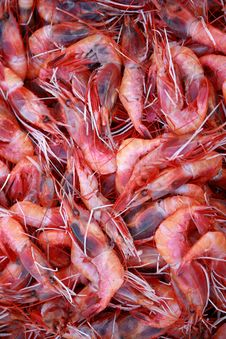 Free Shrimps Stock Images - 15534494
