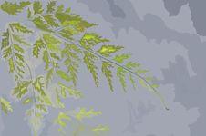 Free Hand Drawn Leaf Of A Fern Stock Image - 15534821