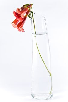Free Three Red Flowers In Transparent Vase Royalty Free Stock Photo - 15534965