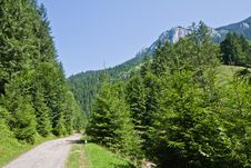 Free Forest Road Stock Photography - 15536372