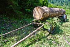 Free Huge Log Stock Images - 15536404