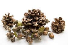Free Fir Cone With Acorn Stock Photography - 15536922