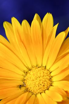 Free Close-up Of Yellow Flower Stock Image - 15537201