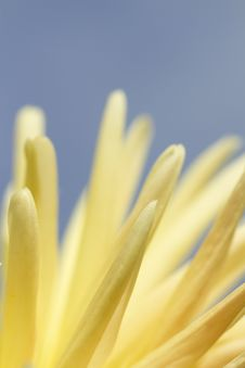 Free Flower Abstract Stock Photography - 15537572