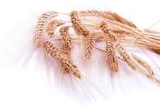 Free Backgrounds Of Wheat Ears Royalty Free Stock Images - 15538099