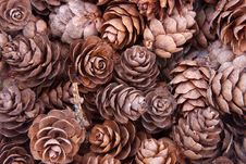 Free Pine Cones Royalty Free Stock Images - 15538319