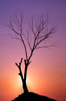 Free Tree On A Sunset Stock Image - 15538641