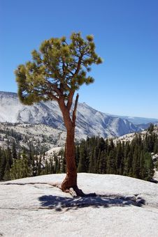 Free Yosemite National Park Royalty Free Stock Image - 15538786