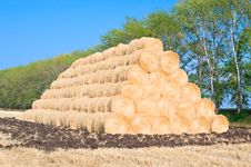 Free Harvest Of Rye Stock Photos - 15538833