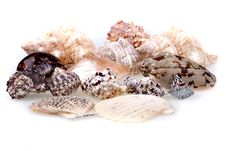 Free Seashells Collection Isolated Stock Photos - 15538963