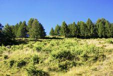 Free Trees In The Mountains Stock Photos - 15538973