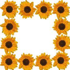 Free Sunflower Royalty Free Stock Photos - 15539028