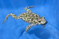 Free Frog Stock Photo - 15540770