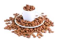Free Coffee Cup Filled With Coffee Beans Royalty Free Stock Photo - 15540815