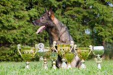 Free German Sheepdog Stock Photos - 15542493