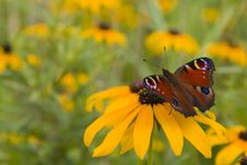 Free Red Butterfly Stock Photos - 15543233