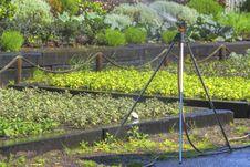 Sprinkler In The Garden Stock Photography