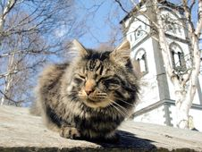 The Local Graveyard Cat Royalty Free Stock Photography