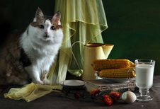 Lady-cat In Still Life Stock Image