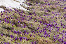 Free Wild Flowers Stock Photo - 15548740