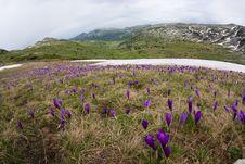 Free Wild Flowers Stock Image - 15548781