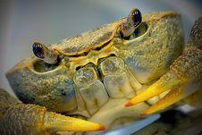 Free Crab Stock Photo - 15548790