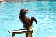 Free Beautiful Sea Lion Royalty Free Stock Photo - 15548795