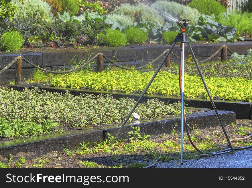 Sprinkler in the garden