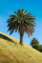 Free Green Palm In Sunny Day. Royalty Free Stock Image - 15559536