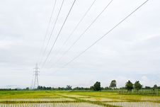 Free Rice Field Royalty Free Stock Photos - 15550188