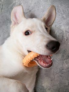 Free Playful Dog Royalty Free Stock Photo - 15550535