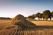 Free Field After Harvest Stock Photos - 15550603