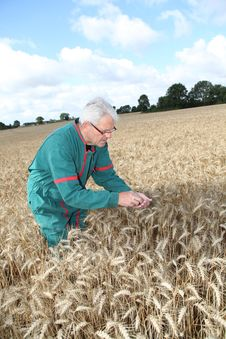 Free Farmer In Wheat Field Stock Images - 15551024