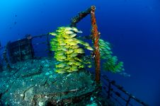 Free School Of Yellow-strip Snappers Stock Image - 15552721