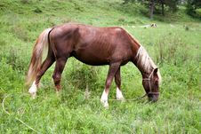 Free Portrait Of A Horse On A Green Meadow. Altai Stock Images - 15553504